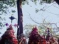 Las flores del Niño florero. - panoramio.jpg