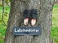 Latschenkiefer - Rosskastanie bei Oelerse RIMG1759.jpg