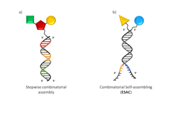 "DNA-encoded chemical library - Fig. 1 DNA-encoded library displaying chemical compounds Schematic representation of DNA-encoded library displaying chemical compounds directly attached to oligonucleotides. a) Library generated by ""stepwise combinatorial"" assembling presenting a single oligonucleotide covalently linked to a putative binding molecule. b) Library construct in ""combinatorial self-assembling"" fashion (Encoded Self-Assembling Chemical library). Multiple pairing oligonucleotides display a covalently linked binding molecule"