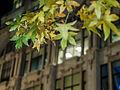 Leafy London (11001998915).jpg
