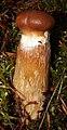 Leivonmäki National Park - fungi 3.jpg