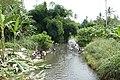 Lessive dans la rivière près de Micoló (São Tomé) (2).jpg