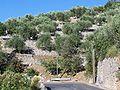Levens oliveraie.jpg