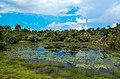 Liberia, Africa - panoramio (261).jpg