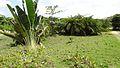 Liberia, Africa - panoramio (283).jpg