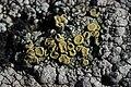 Lichen (22774202255).jpg