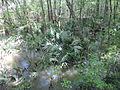 Little River Trail 08, Reed Bingham Park.JPG