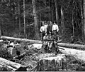 Loggers in the woods, Copalis Lumber Company, near Carlisle, ca 1917 (KINSEY 2065).jpeg