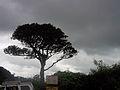 Lone Tree with blending Tones.jpg