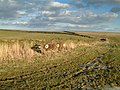 Looking towards Meek Fields - geograph.org.uk - 133568.jpg