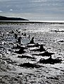 Luce estuary - remains of ship - geograph.org.uk - 556490.jpg