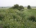 Lush vegetation - geograph.org.uk - 826132.jpg