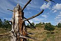 Lyngbakkerne - panoramio.jpg