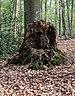Münster, Wolbeck, Wolbecker Tiergarten, Naturwaldzelle -Teppes Viertel- -- 2014 -- 7105.jpg