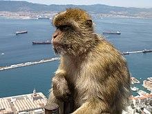 Gibilterra - Wikipedia
