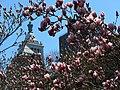 Magnolia & Con Ed Building (13907253522).jpg