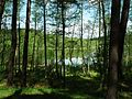 Male Lake, Puszcza Notecka.JPG