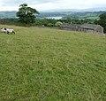 Malkin Tower Farm - panoramio (1).jpg