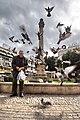 Man feeding pigeons in Sarayönü, Nicosia.jpg