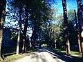 Maple St. - panoramio.jpg