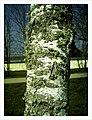 March Flechte Parc Natural Mundenhof Freiburg - Master Seasons Rhine Valley Photography 2013 - panoramio (1).jpg
