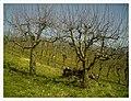 March Spring Denzlingen - Master Season Rhine Valley Photography - panoramio (1).jpg