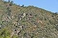 Matorral de Puya y Echinopsis chiloensis Parque Nacional La Campana.JPG
