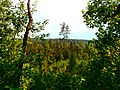 Medumi Parish, Latvia - panoramio (11).jpg