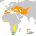 Merops apiaster en.png