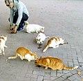 Messina cat colony 2-11-20.jpg