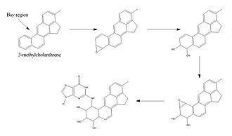 Methylcholanthrene - 2.Methylcholanthrene mechanism