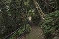Minnamurra Rainforest - panoramio (30).jpg