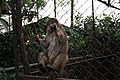 Monkey in the cage 3.jpg