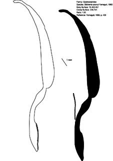 <i>Sibitrema</i> genus of worms