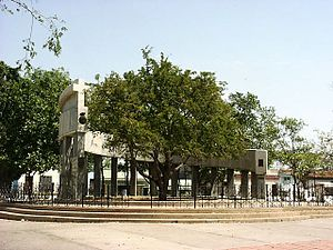 Santa Clara, Cuba - Tamarind, Santa Clara's tree and foundation of city monument.