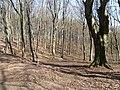 Morenowy las - panoramio.jpg