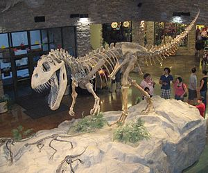 Rekonstruktion eines Torvosaurus-Skeletts im Museum of Ancient Life, Utah