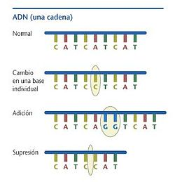 mutacion molecular: