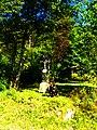 My Dog - panoramio (1).jpg