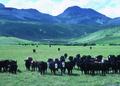 NRCSMT83001 - Montana (5045)(NRCS Photo Gallery).tif