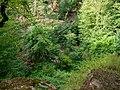 Nature, Oguz (P1090488).jpg