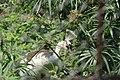 Nature 190629-WA0069.jpg