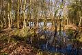 Nature Reserve, Elstead - geograph.org.uk - 1600423.jpg