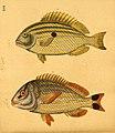 Naturgeschichte in Bildern mit erläuterndem Text (Taf. LVI) (6059213460).jpg