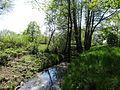 Naturschutzgebiet Boberger Niederung - 08.05.2016 - DSC07105.JPG