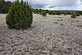 Near Ft. Stanton - Flickr - aspidoscelis (10).jpg