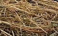 Needle in haystack1.jpg
