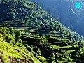 Neelum Valley - panoramio.jpg