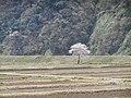 Negoya, Itoigawa, Niigata Prefecture 949-0536, Japan - panoramio (5).jpg