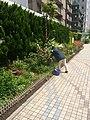 Neighborhood gardener (14243425604).jpg